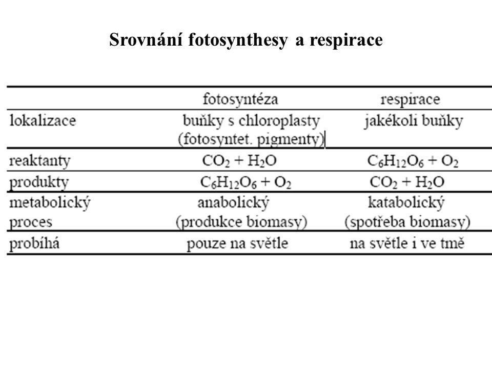 Srovnání fotosynthesy a respirace