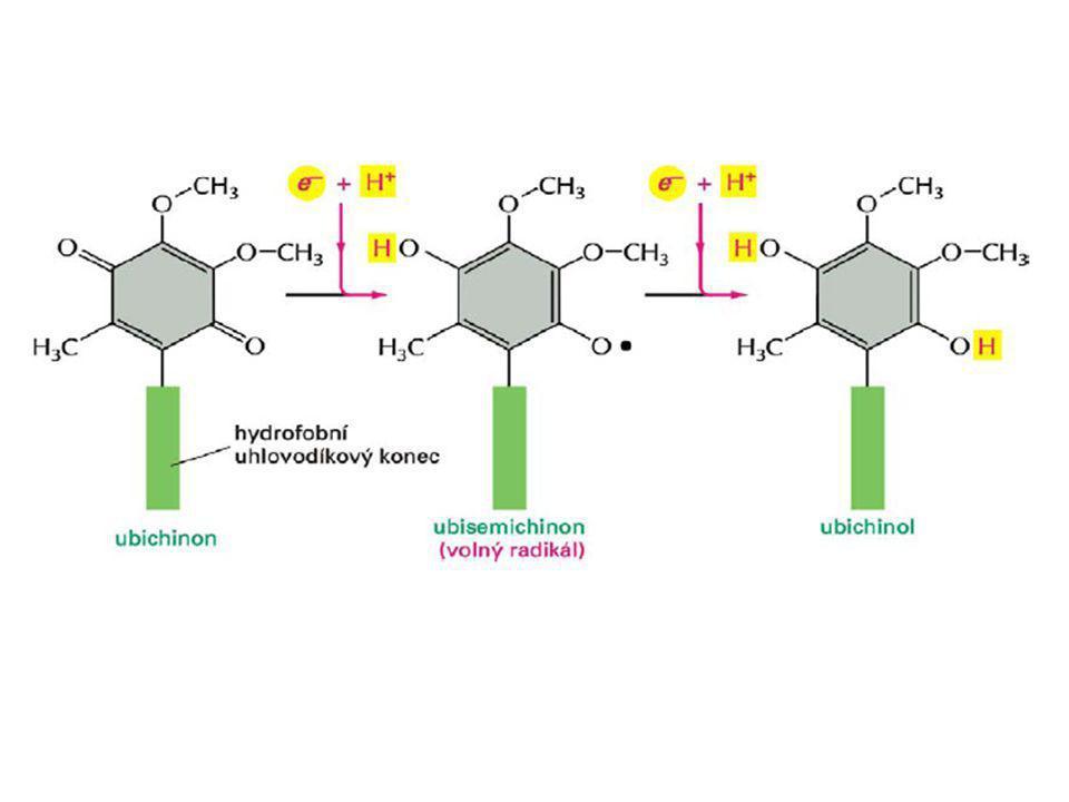 """PS II – vázán na vnitřní (lipidickou) část membrány, reakční centrum absorbuje světlo o vlnové délce 680 nm, místo fotolýzy H 2 O PS I – vázán na vnější (proteinovou) část membrány, reakční centrum absorbuje světlo o vlnové délce 700 nm, místo vzniku ATP, NADPH+ H +  chlorofyl """"a je vázán na reakční centrum, dále antenální molekuly doplňkových pigmentů, účinnost je až 95%"""