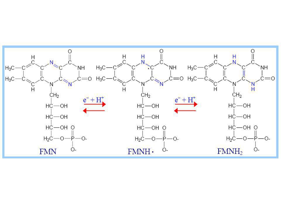 Problémy fixace CO 2  RUBISCO může fungovat jako karboxylasa (váže CO 2, Calvinův cyklus) nebo jako oxidoreduktasa (vazba s O 2 ), v poměru 3:1 =fotorespirace  O 2 + RUBP  PGA + 2P glykolát, problematické a energeticky náročné zpracování produktů fotorespirace, ve 3 různých organelách (chloroplast, peroxisom, mitochondrie)  při  teplotě a intenzitě ozáření se snižuje koncentrace CO 2 v chloroplastech a zvyšuje se poměr fotorespirace