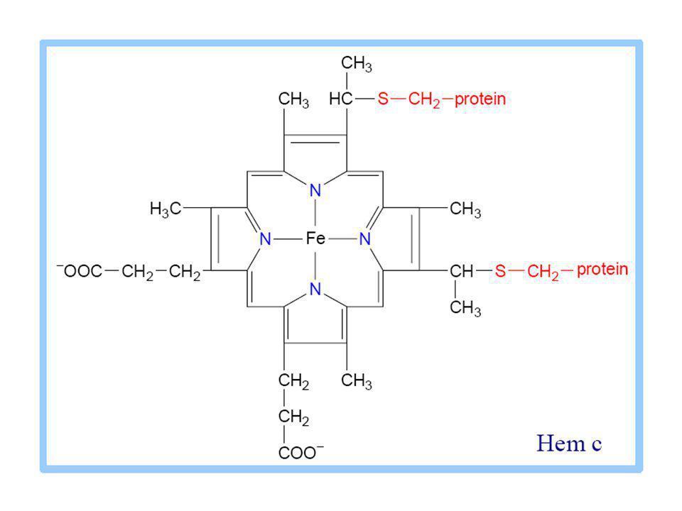 Schéma světlé fáze fotosyntesy