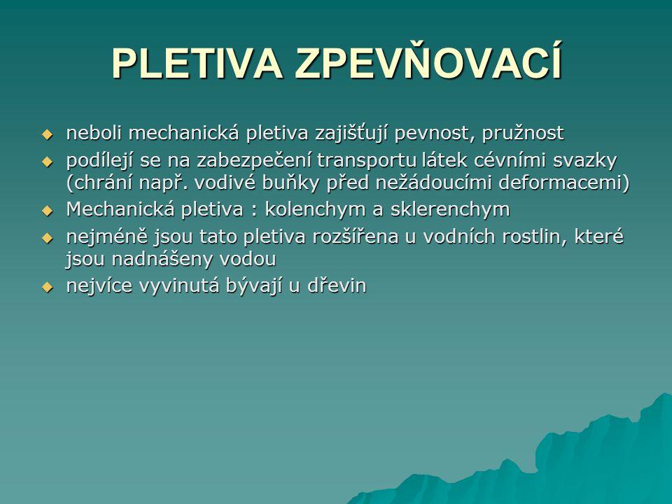 PLETIVA ZPEVŇOVACÍ  neboli mechanická pletiva zajišťují pevnost, pružnost  podílejí se na zabezpečení transportu látek cévními svazky (chrání např.