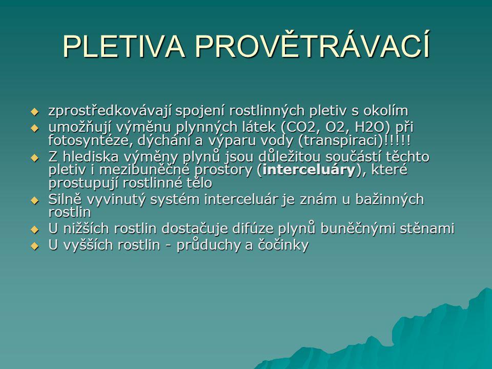PLETIVA PROVĚTRÁVACÍ  zprostředkovávají spojení rostlinných pletiv s okolím  umožňují výměnu plynných látek (CO2, O2, H2O) při fotosyntéze, dýchání