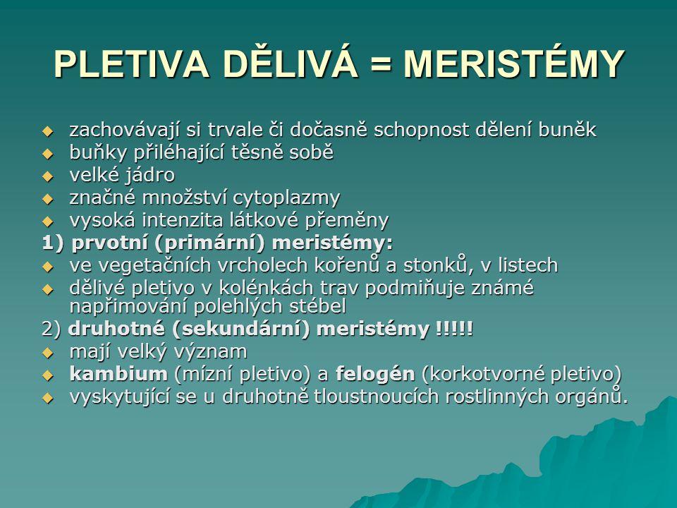 PLETIVA DĚLIVÁ = MERISTÉMY  zachovávají si trvale či dočasně schopnost dělení buněk  buňky přiléhající těsně sobě  velké jádro  značné množství cy