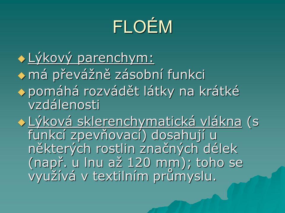 FLOÉM  Lýkový parenchym:  má převážně zásobní funkci  pomáhá rozvádět látky na krátké vzdálenosti  Lýková sklerenchymatická vlákna (s funkcí zpevňovací) dosahují u některých rostlin značných délek (např.