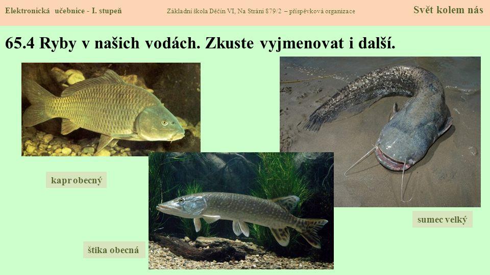 65.5 Živočichové v čistých vodách Elektronická učebnice - I.