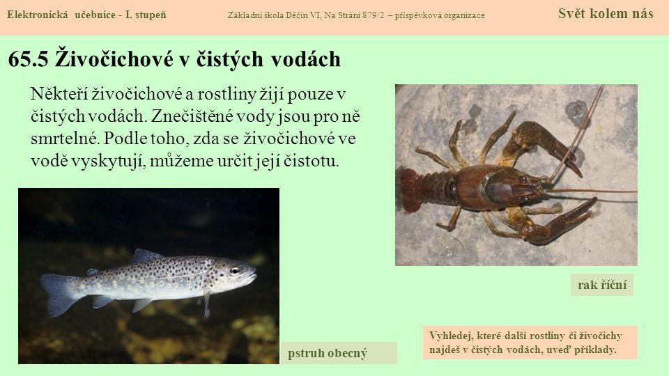 65.6 Obojživelníci Elektronická učebnice - I.