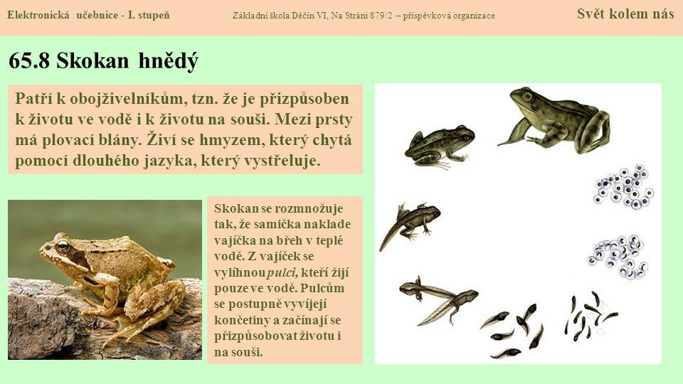 65.9 Zvířata Elektronická učebnice - I.
