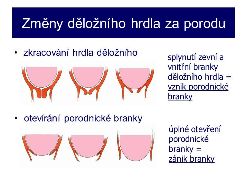 Změny děložního hrdla za porodu •zkracování hrdla děložního splynutí zevní a vnitřní branky děložního hrdla = vznik porodnické branky úplné otevření porodnické branky = zánik branky • •otevírání porodnické branky
