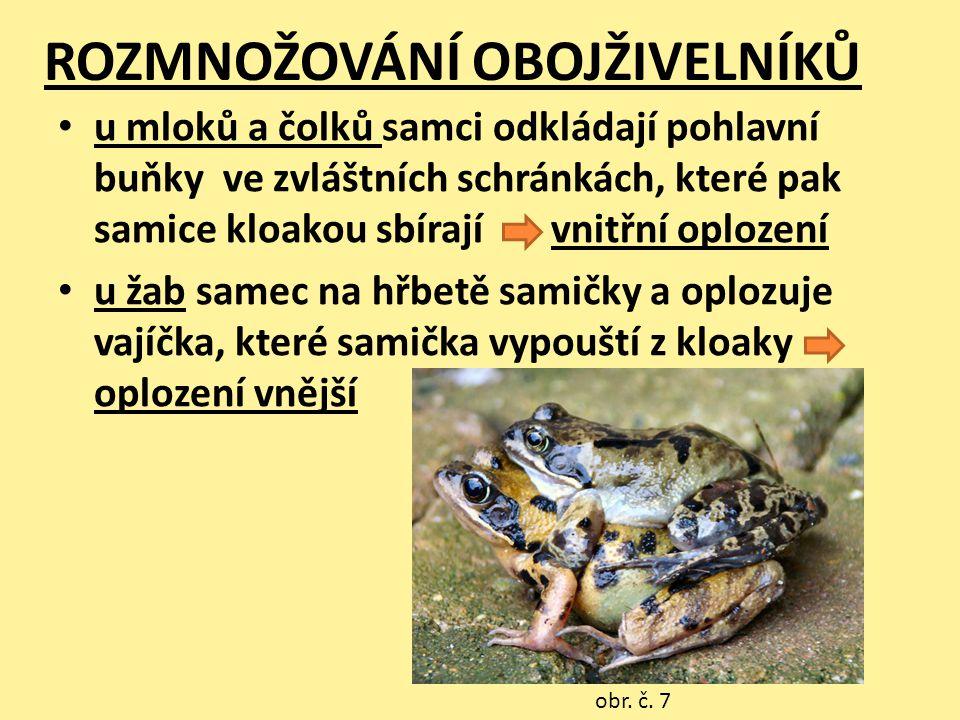 ROPUCHA OBECNÁ • šedá až hnědá barva kůže, samice je větší • nejčastější ropucha v ČR • žije 4-9 let obr.