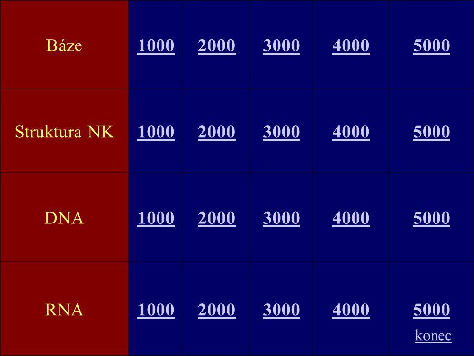 Báze10002000300040005000 Struktura NK10002000300040005000 DNA10002000300040005000 RNA10002000300040005000 konec