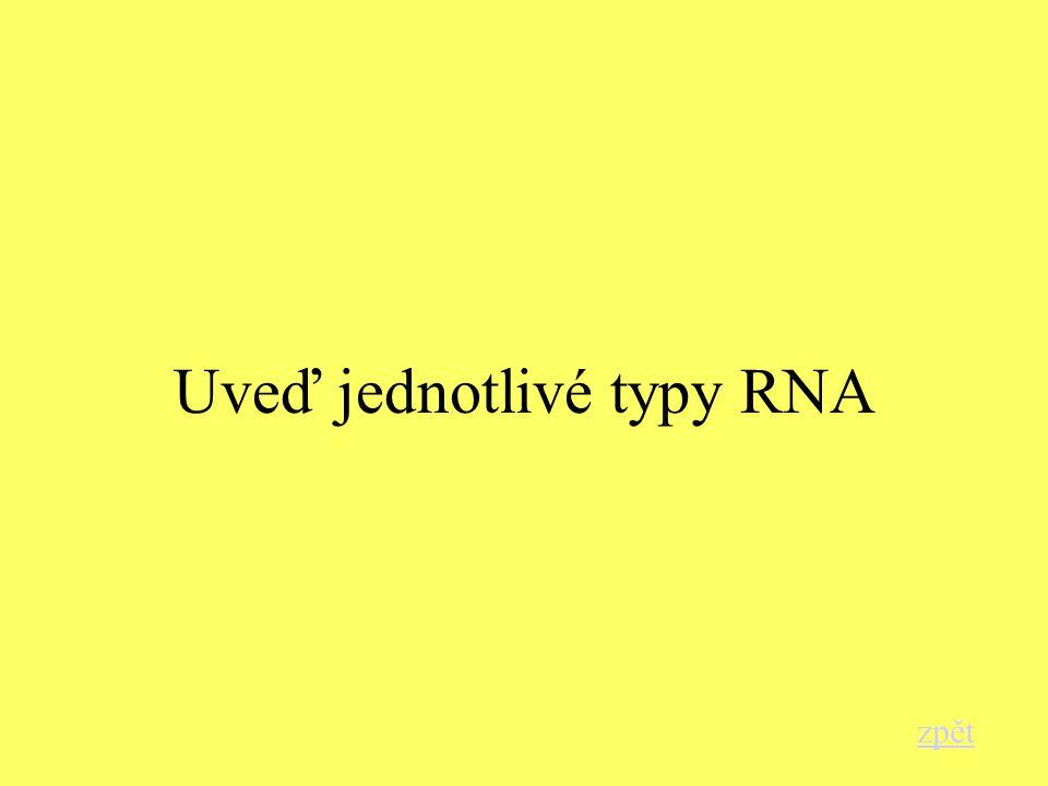 Uveď jednotlivé typy RNA zpět