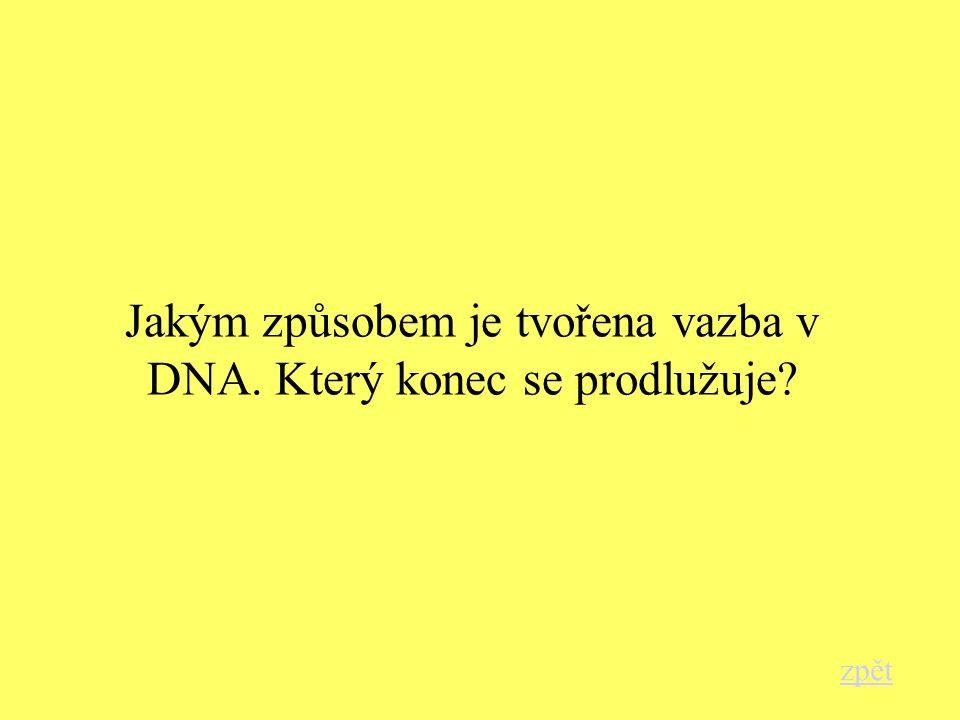 Jakým způsobem je tvořena vazba v DNA. Který konec se prodlužuje? zpět