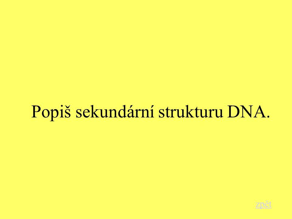 Popiš sekundární strukturu DNA. zpět