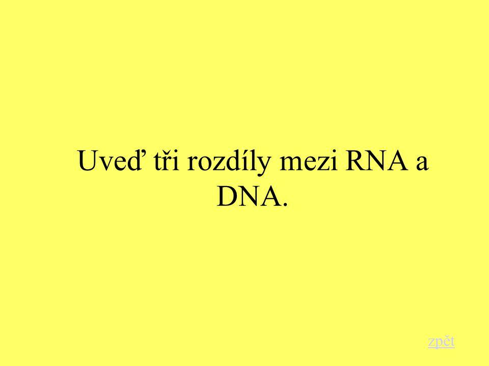 Uveď tři rozdíly mezi RNA a DNA. zpět