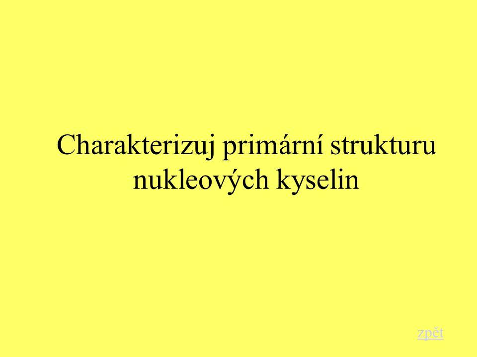 Charakterizuj primární strukturu nukleových kyselin zpět