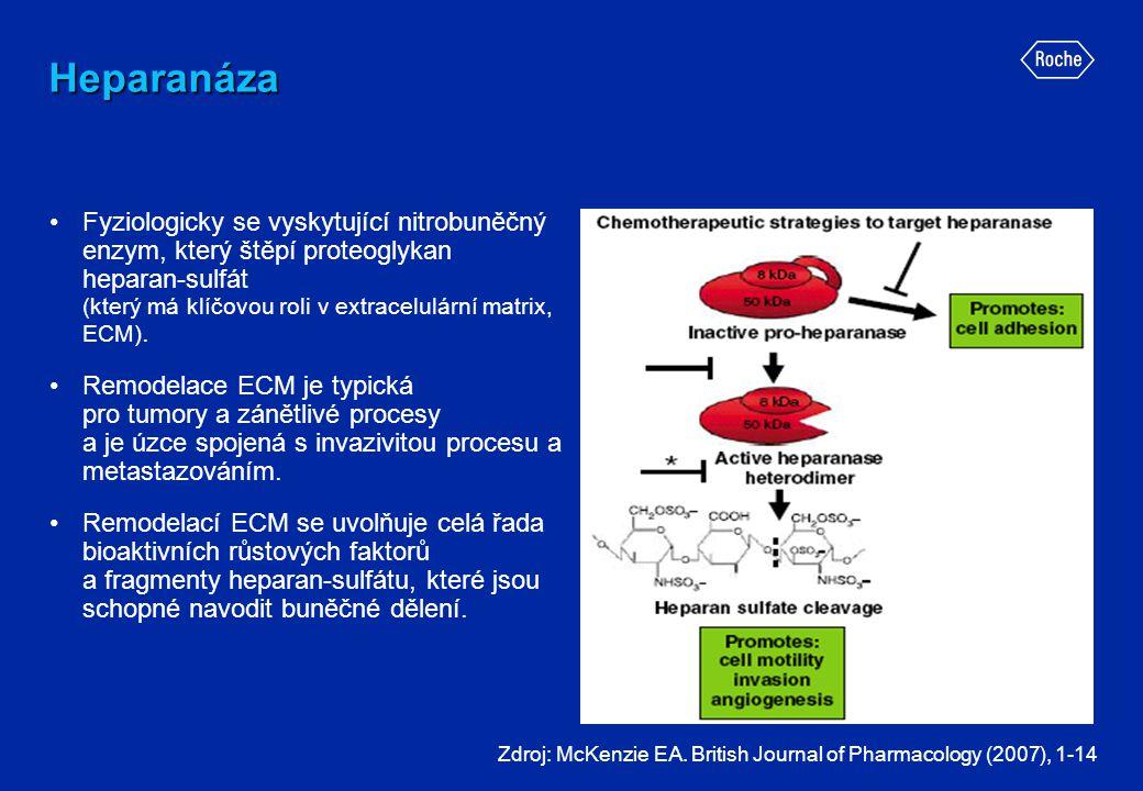 Heparanáza •Fyziologicky se vyskytující nitrobuněčný enzym, který štěpí proteoglykan heparan-sulfát (který má klíčovou roli v extracelulární matrix, E