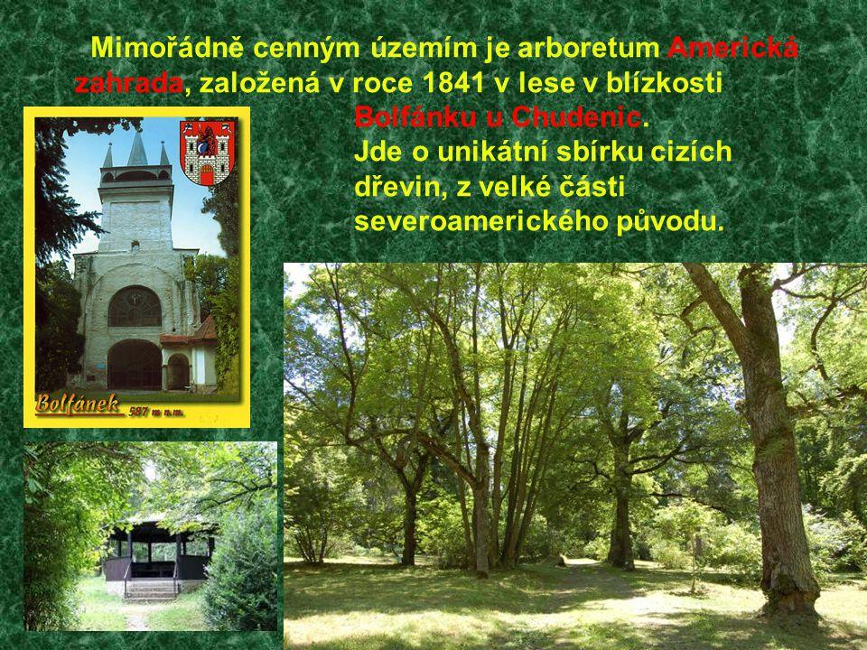 Mimořádně cenným územím je arboretum Americká zahrada, založená v roce 1841 v lese v blízkosti Bolfánku u Chudenic. Jde o unikátní sbírku cizích dřevi