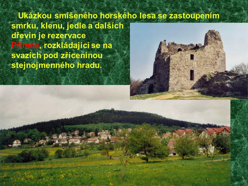 Jedním z nejcennějších chráněných území nejen Českého lesa, ale celého Plzeňského kraje, je přírodní rezervace Diana, ležící nedaleko stejnojmenné osady na mírném návrší Třískolupského vrchu v ohbí Kateřinského potoka.