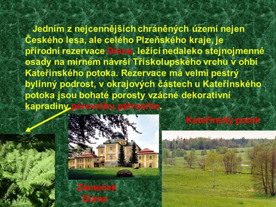 Jedním z nejcennějších chráněných území nejen Českého lesa, ale celého Plzeňského kraje, je přírodní rezervace Diana, ležící nedaleko stejnojmenné osa