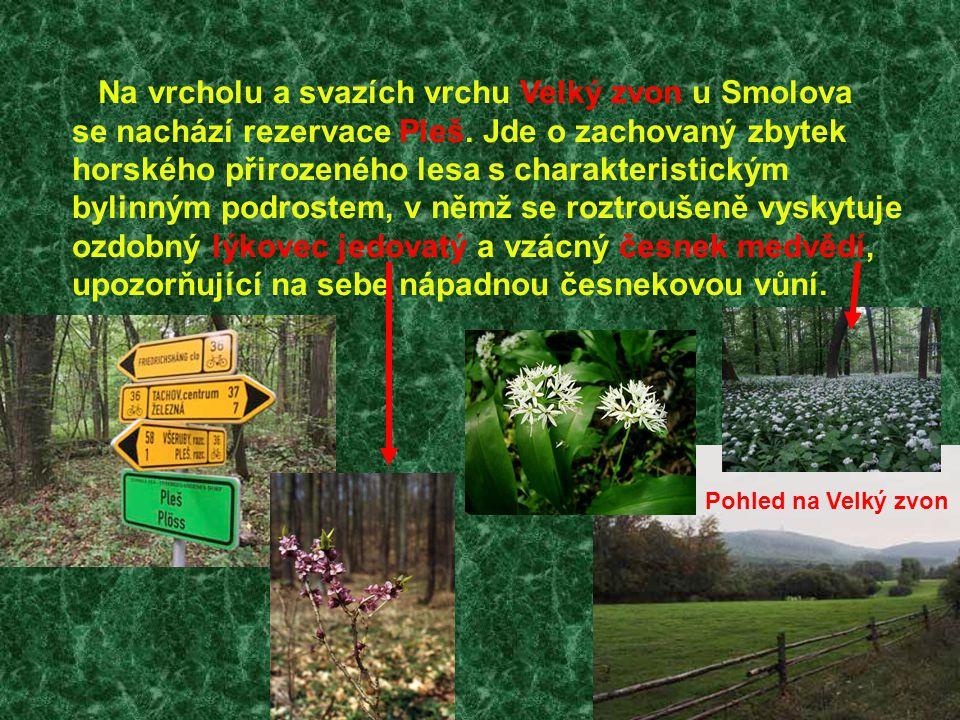 Na vrcholu a svazích vrchu Velký zvon u Smolova se nachází rezervace Pleš. Jde o zachovaný zbytek horského přirozeného lesa s charakteristickým bylinn
