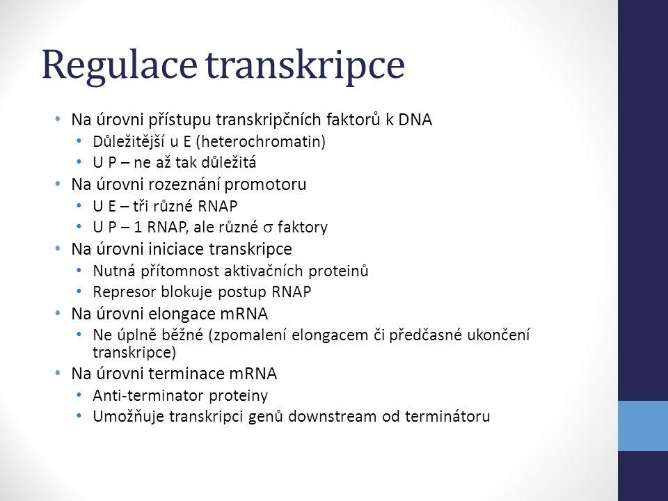 Regulace transkripce • Na úrovni přístupu transkripčních faktorů k DNA • Důležitější u E (heterochromatin) • U P – ne až tak důležitá • Na úrovni roze