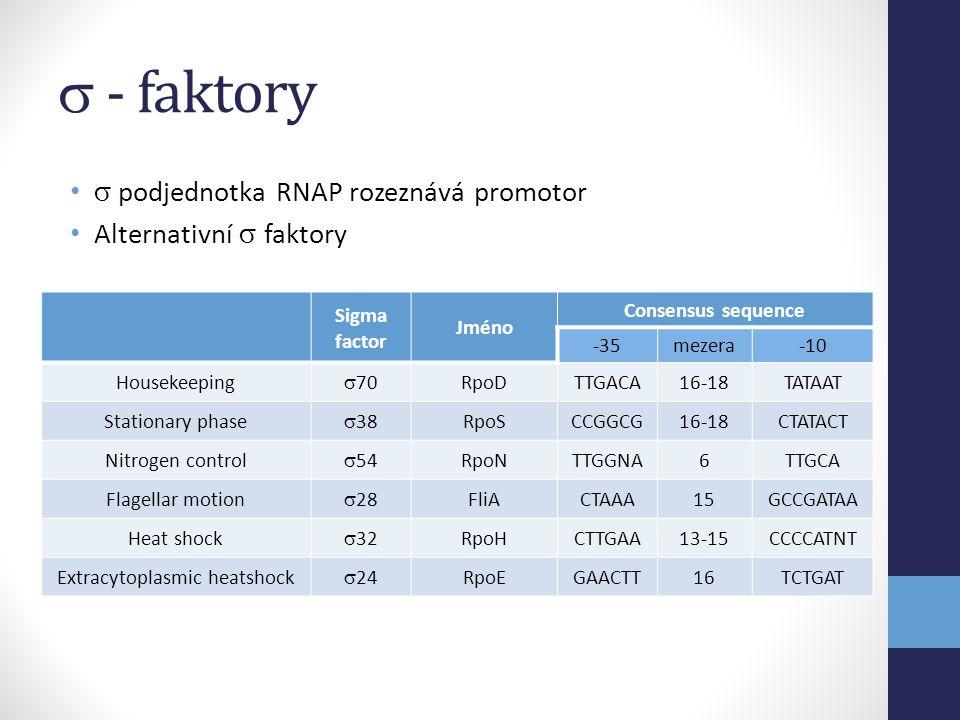  - faktory •  podjednotka RNAP rozeznává promotor • Alternativní  faktory Sigma factor Jméno Consensus sequence -35mezera-10 Housekeeping  70 RpoD