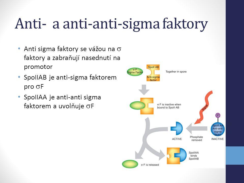 Anti- a anti-anti-sigma faktory • Anti sigma faktory se vážou na  faktory a zabraňují nasednutí na promotor • SpoIIAB je anti-sigma faktorem pro  F
