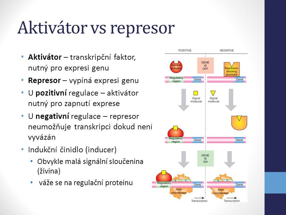 Aktivátor vs represor • Aktivátor – transkripční faktor, nutný pro expresi genu • Represor – vypíná expresi genu • U pozitivní regulace – aktivátor nu