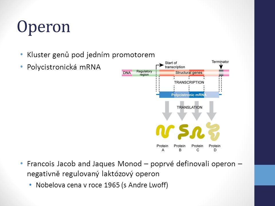 Operon • Kluster genů pod jedním promotorem • Polycistronická mRNA • Francois Jacob and Jaques Monod – poprvé definovali operon – negativně regulovaný