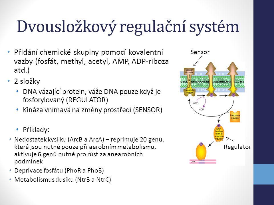 Dvousložkový regulační systém • Přidání chemické skupiny pomocí kovalentní vazby (fosfát, methyl, acetyl, AMP, ADP-riboza atd.) • 2 složky • DNA vázaj