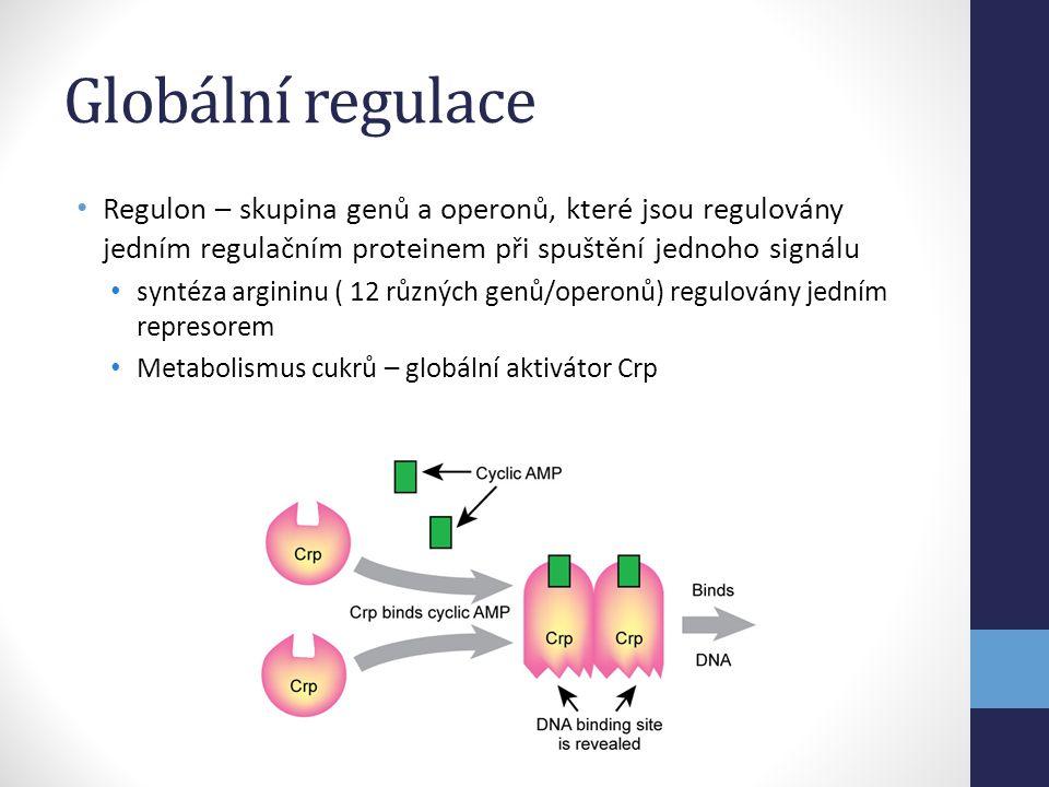 Globální regulace • Regulon – skupina genů a operonů, které jsou regulovány jedním regulačním proteinem při spuštění jednoho signálu • syntéza arginin