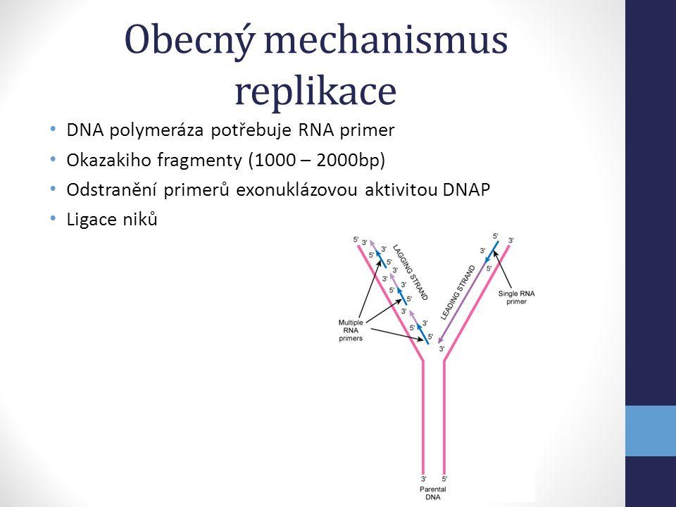 Obecný mechanismus replikace • DNA polymeráza potřebuje RNA primer • Okazakiho fragmenty (1000 – 2000bp) • Odstranění primerů exonuklázovou aktivitou
