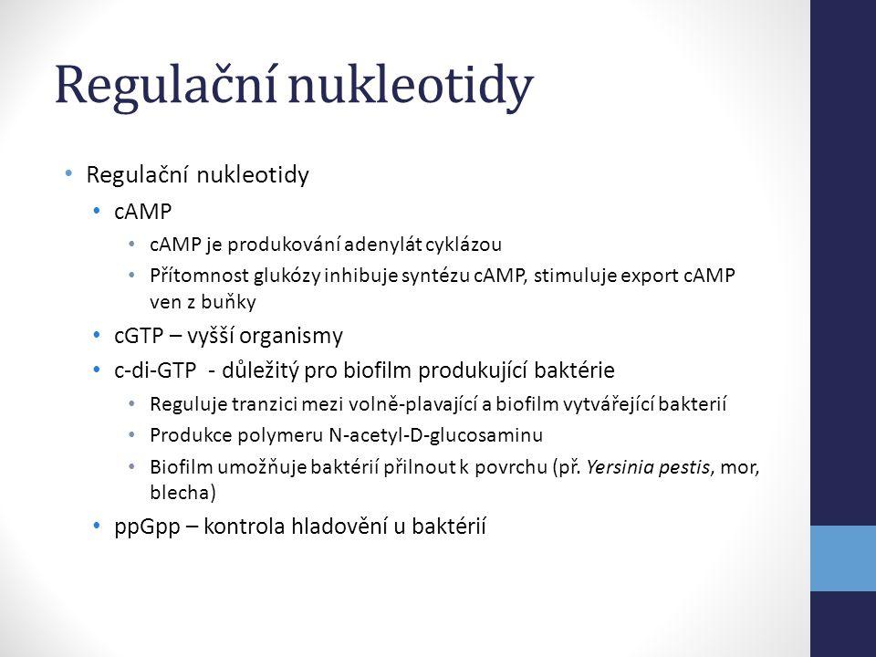 Regulační nukleotidy • Regulační nukleotidy • cAMP • cAMP je produkování adenylát cyklázou • Přítomnost glukózy inhibuje syntézu cAMP, stimuluje expor