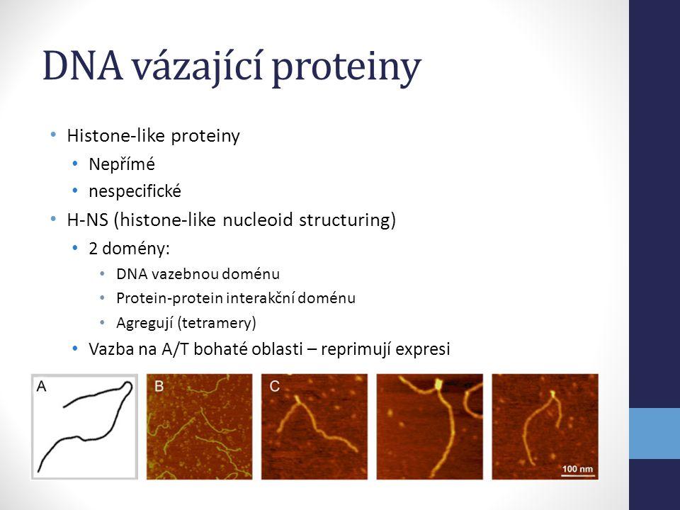 DNA vázající proteiny • Histone-like proteiny • Nepřímé • nespecifické • H-NS (histone-like nucleoid structuring) • 2 domény: • DNA vazebnou doménu •
