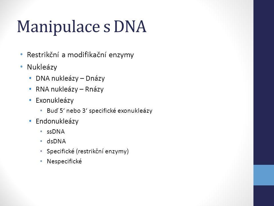 Manipulace s DNA • Restrikční a modifikační enzymy • Nukleázy • DNA nukleázy – Dnázy • RNA nukleázy – Rnázy • Exonukleázy • Buď 5' nebo 3' specifické