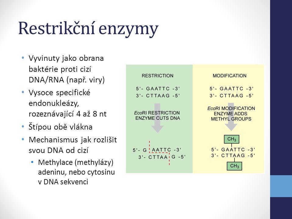 Restrikční enzymy • Vyvinuty jako obrana baktérie proti cizí DNA/RNA (např. viry) • Vysoce specifické endonukleázy, rozeznávající 4 až 8 nt • Štípou o
