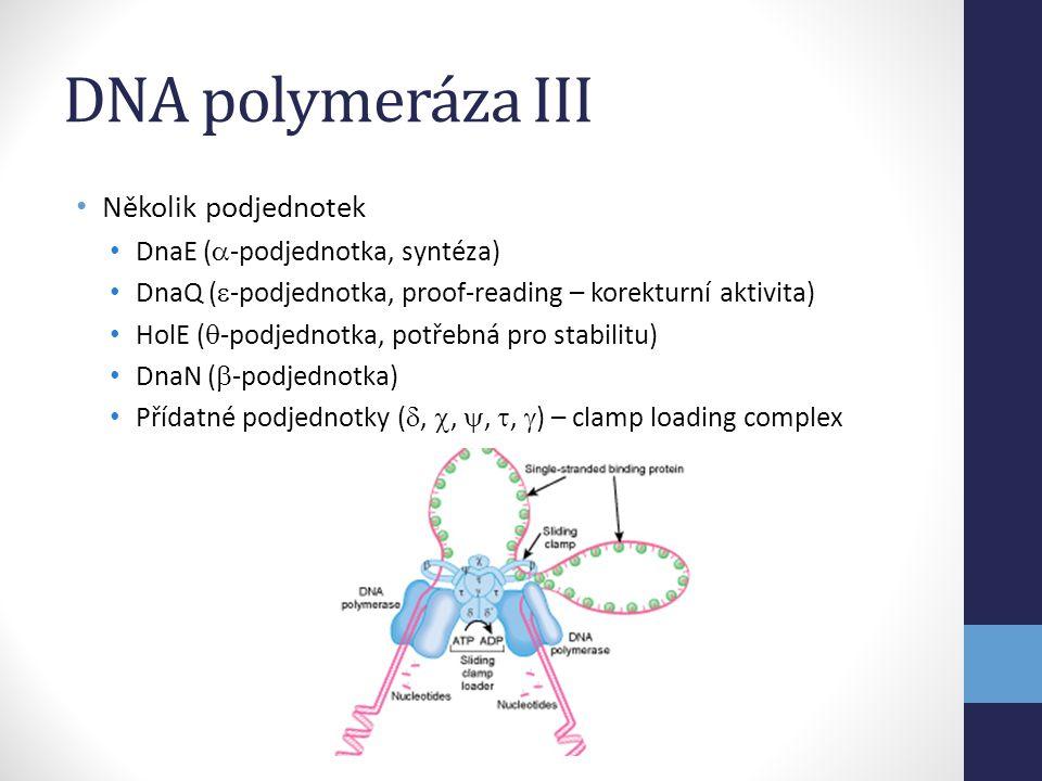 Ko-represory • Některé represory jsou aktivní pouze, pokud vážou nějakou molekulu • Velmi časté u biosyntetických metabolických drah • Příklad: arginin