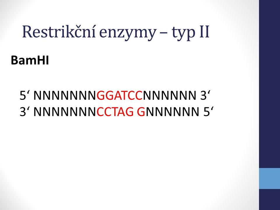 GATCCNNNNNN 3' GNNNNNN 5' BamHI 5' NNNNNNNG 3' NNNNNNNCCTAG Restrikční enzymy – typ II