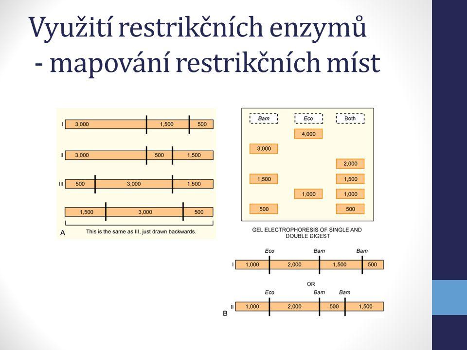 Využití restrikčních enzymů - mapování restrikčních míst