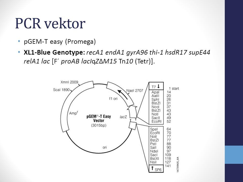PCR vektor • pGEM-T easy (Promega) • XL1-Blue Genotype: recA1 endA1 gyrA96 thi-1 hsdR17 supE44 relA1 lac [F´ proAB lacIqZΔM15 Tn10 (Tetr)].