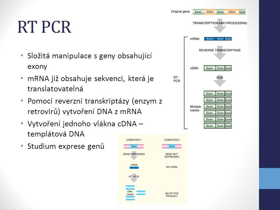RT PCR • Složitá manipulace s geny obsahující exony • mRNA již obsahuje sekvenci, která je translatovatelná • Pomocí reverzní transkriptázy (enzym z r