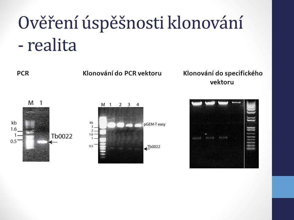 Ověření úspěšnosti klonování - realita PCR Klonování do PCR vektoru Klonování do specifického vektoru