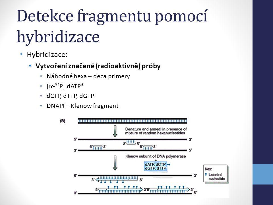 • Hybridizace: • Vytvoření značené (radioaktivně) próby • Náhodné hexa – deca primery • [  - 32 P] dATP* • dCTP, dTTP, dGTP • DNAPI – Klenow fragment