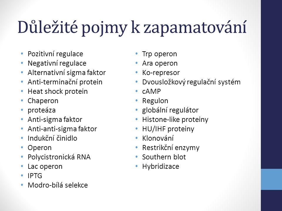 Důležité pojmy k zapamatování • Pozitivní regulace • Negativní regulace • Alternativní sigma faktor • Anti-terminační protein • Heat shock protein • C