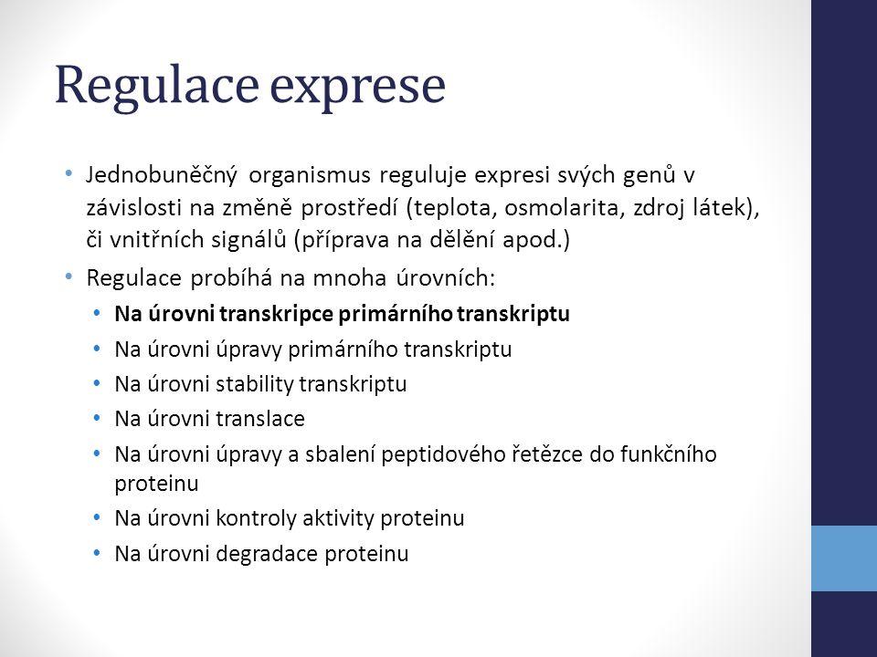 • Jednobuněčný organismus reguluje expresi svých genů v závislosti na změně prostředí (teplota, osmolarita, zdroj látek), či vnitřních signálů (přípra