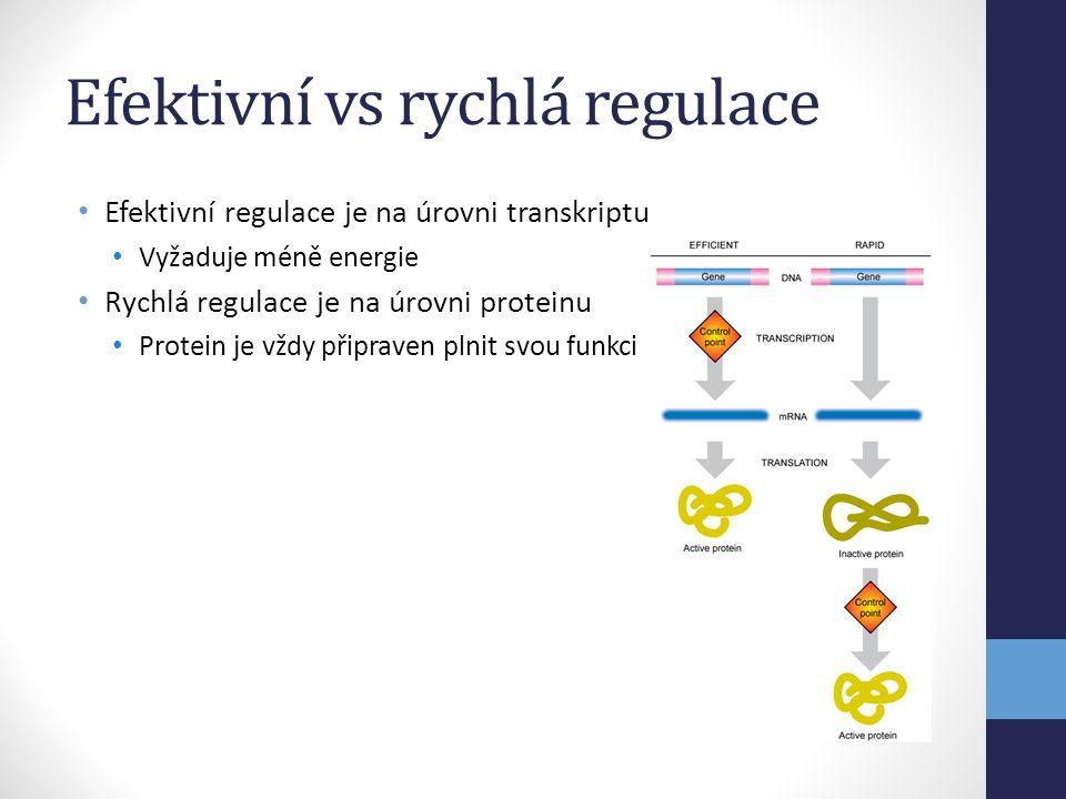 Efektivní vs rychlá regulace • Efektivní regulace je na úrovni transkriptu • Vyžaduje méně energie • Rychlá regulace je na úrovni proteinu • Protein j