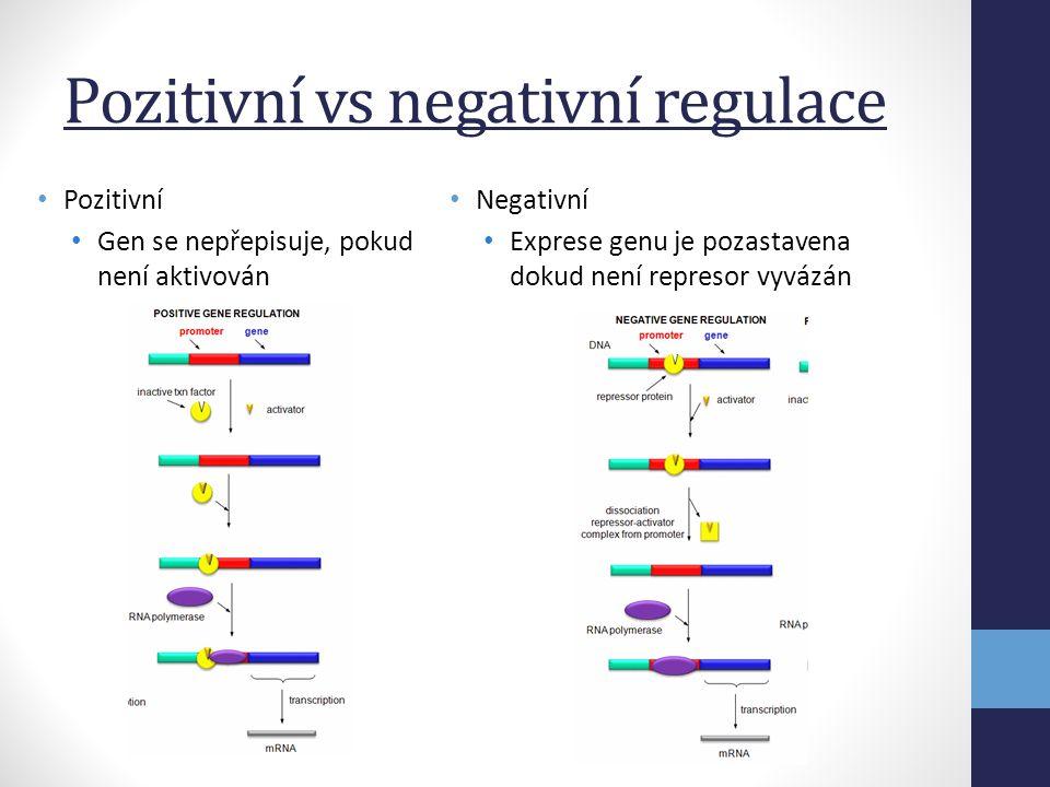 Regulace transkripce • Na úrovni přístupu transkripčních faktorů k DNA • Důležitější u E (heterochromatin) • U P – ne až tak důležitá • Na úrovni rozeznání promotoru • U E – tři různé RNAP • U P – 1 RNAP, ale různé  faktory • Na úrovni iniciace transkripce • Nutná přítomnost aktivačních proteinů • Represor blokuje postup RNAP • Na úrovni elongace mRNA • Ne úplně běžné (zpomalení elongacem či předčasné ukončení transkripce) • Na úrovni terminace mRNA • Anti-terminator proteiny • Umožňuje transkripci genů downstream od terminátoru