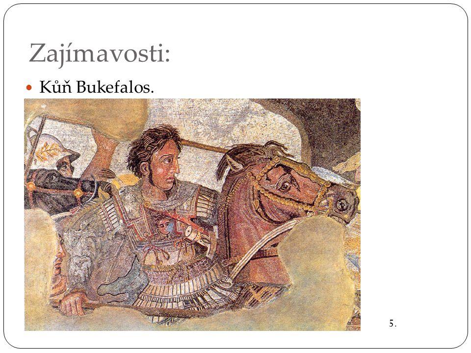 Zajímavosti: KKůň Bukefalos. 5.