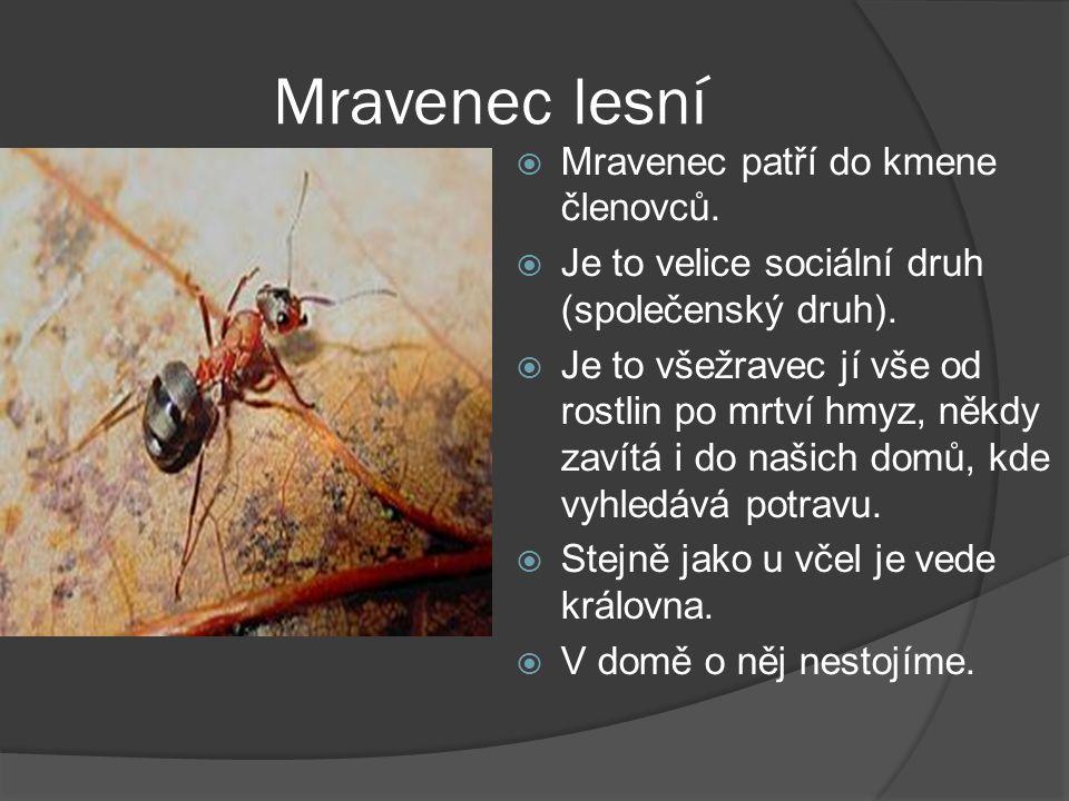 Mravenec lesní  Mravenec patří do kmene členovců.  Je to velice sociální druh (společenský druh).  Je to všežravec jí vše od rostlin po mrtví hmyz,