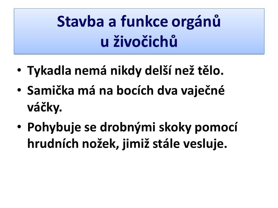 Stavba a funkce orgánů u živočichů • Tykadla nemá nikdy delší než tělo. • Samička má na bocích dva vaječné váčky. • Pohybuje se drobnými skoky pomocí